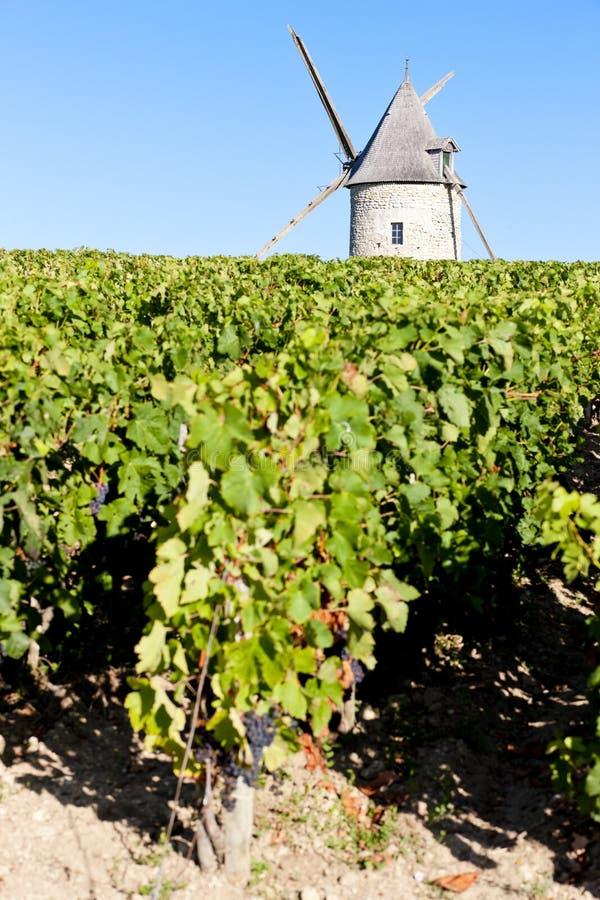 vinhedo com o moinho de vento perto de Blaignan, região do Bordéus, França fotografia de stock
