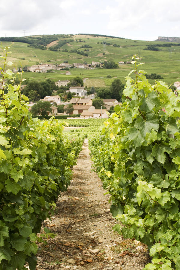 Vinhedo com vista na vila de Borgonha fotos de stock royalty free