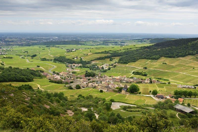 Vinhedo da vila de Solutré, Bourgogne, França foto de stock royalty free