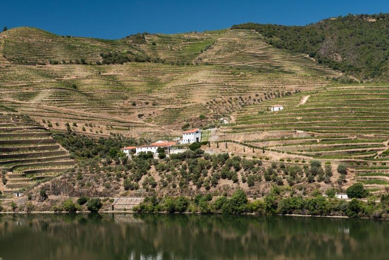 Vinhedo de Alto Douro e rio, Portugal imagem de stock