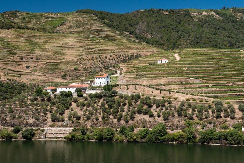 Vinhedo de Alto Douro, Portugal imagens de stock