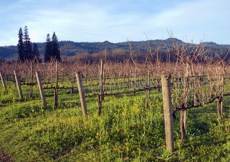 Vinhedo de Napa Valley foto de stock