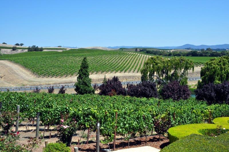 Vinhedo de Napa Valley, Califórnia fotografia de stock royalty free