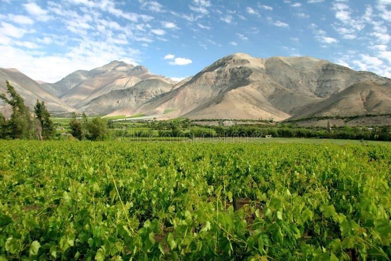 Vinhedo de Valle del Elqui imagens de stock royalty free