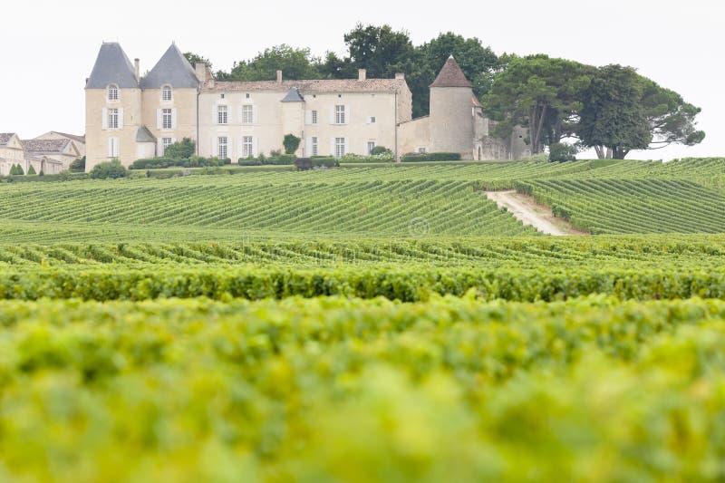 vinhedo e d& x27 do castelo; Yquem, região dos Sauternes, França fotos de stock