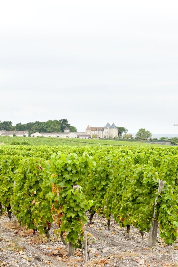 vinhedo e d& x27 do castelo; Yquem, região dos Sauternes, França foto de stock