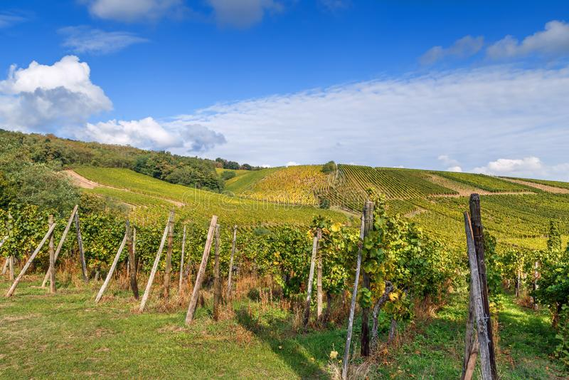 Vinhedo em Alsácia, France foto de stock royalty free