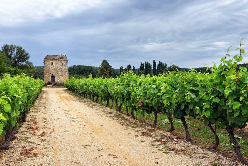 Vinhedo em Provence, France fotos de stock royalty free