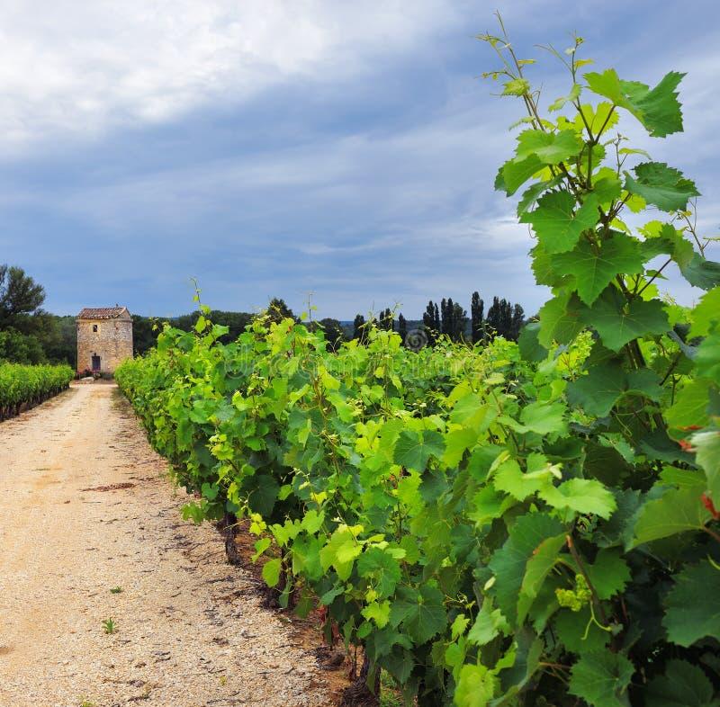 Vinhedo em Provence, France imagem de stock royalty free