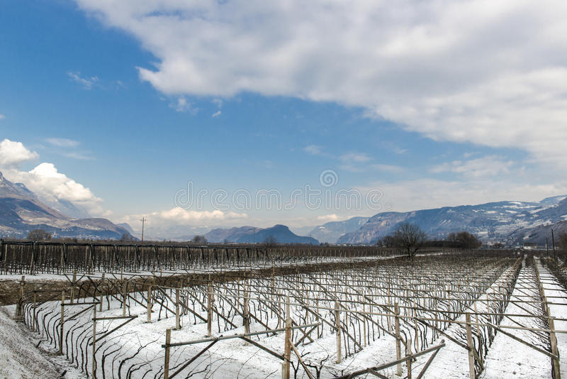 Vinhedo em Tirol no inverno foto de stock royalty free
