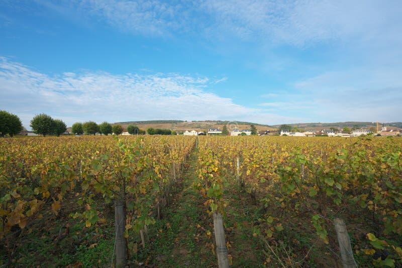 Vinhedo em Vosne-Romanee, Cote de Nuits, Bourgogne, França fotos de stock royalty free