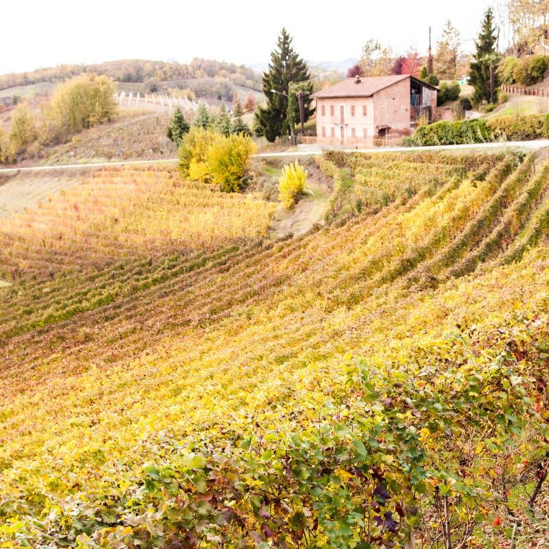 Vinhedo italiano fotos de stock royalty free