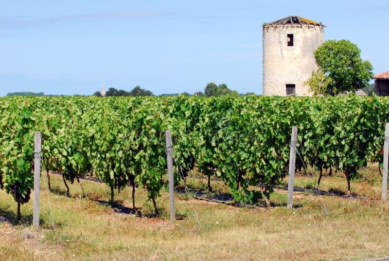 Vinhedo na região do Bordéus, França imagens de stock royalty free