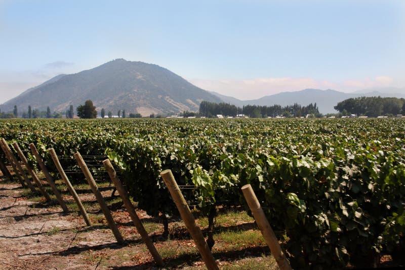 Vinhedo no Chile imagens de stock