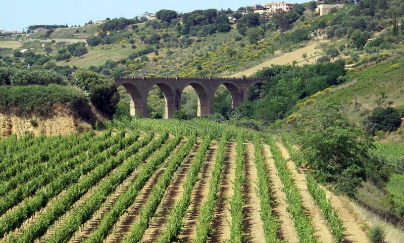Vinhedo no console de Sicília fotografia de stock royalty free