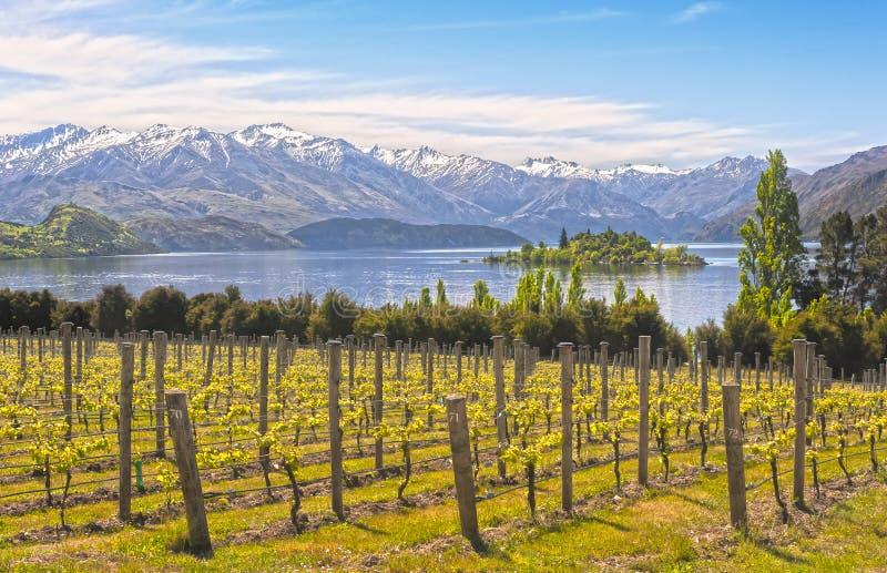 Vinhedo no lago - Nova Zelândia fotos de stock