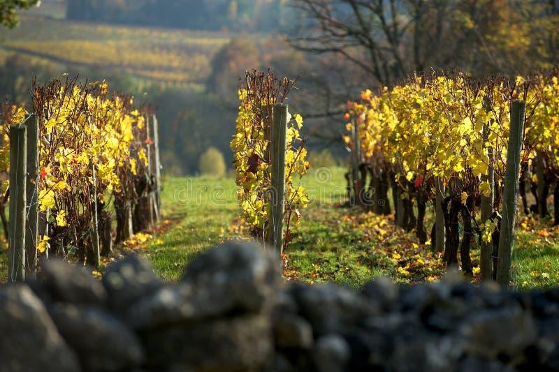 Vinhedo no outono Saint Emilion, Bordéus imagens de stock royalty free