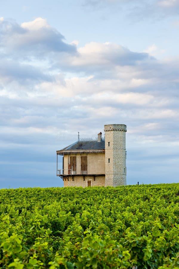 Vinhedos, Borgonha, France foto de stock