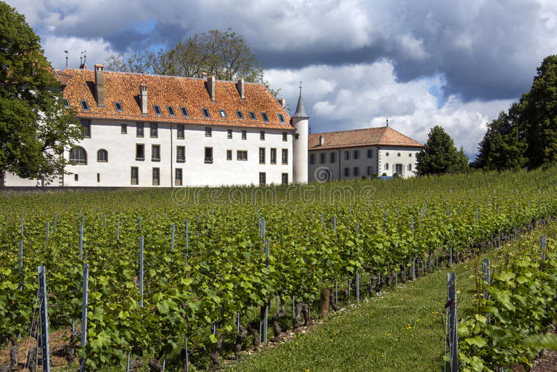 Vinhedos - castelo Allaman - Switzerland foto de stock royalty free