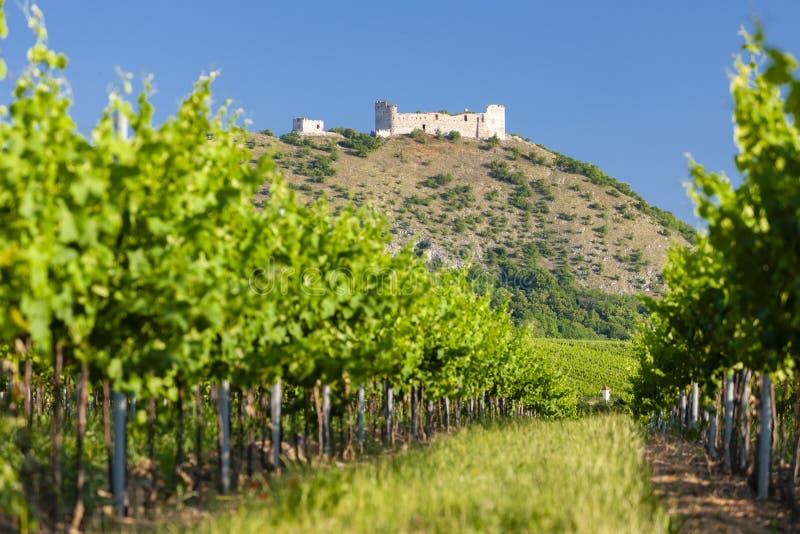 vinhedos, castelo Devicky, Palava, região de Moravia, República Checa imagem de stock