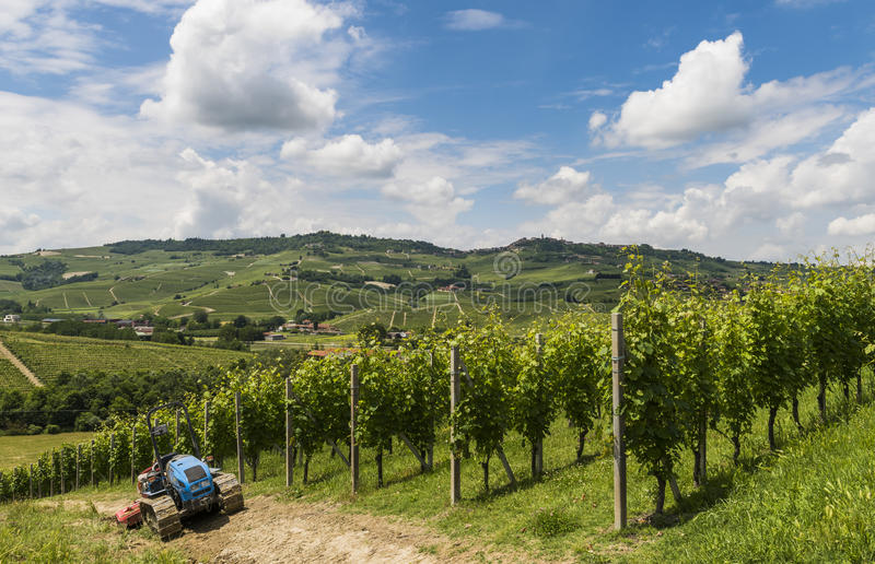 Vinhedos de Barbaresco, Garbelletto Piedmont fotografia de stock royalty free