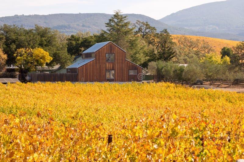 Vinhedos de Napa Valley em Autumn Colors e no celeiro fotos de stock royalty free
