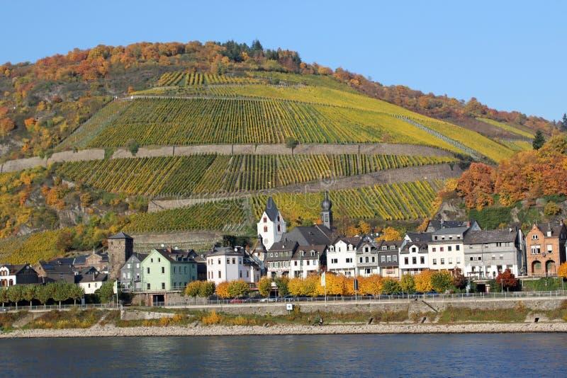 Vinhedos de Rhine River fotos de stock royalty free