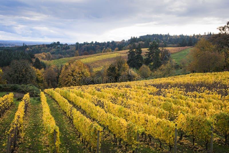 Download Vinhedos Do Outono, Vale De Willamette, Oregon Imagem de Stock - Imagem de amarelo, agricultura: 29835415