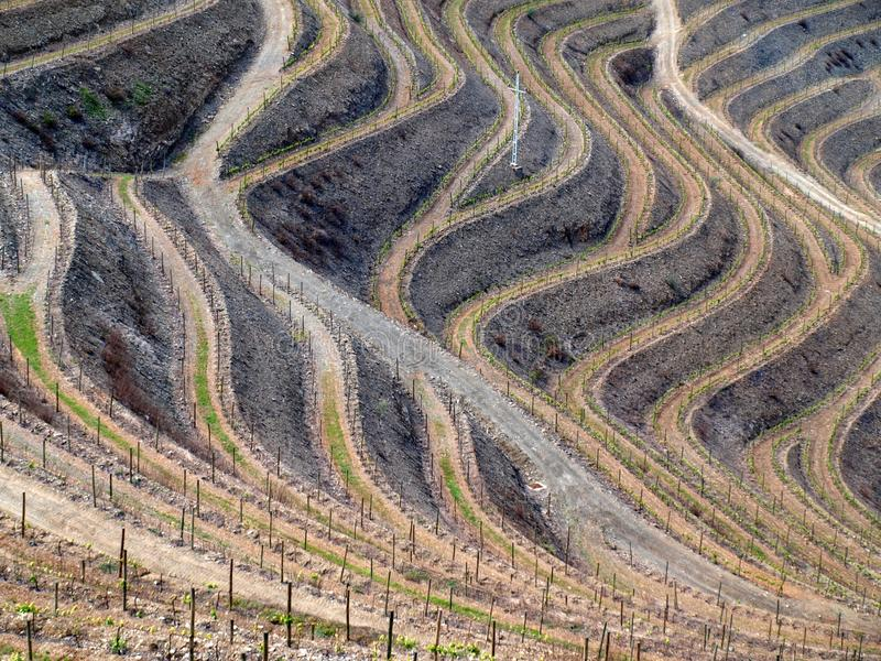 Vinhedos do rio de Douro imagem de stock royalty free
