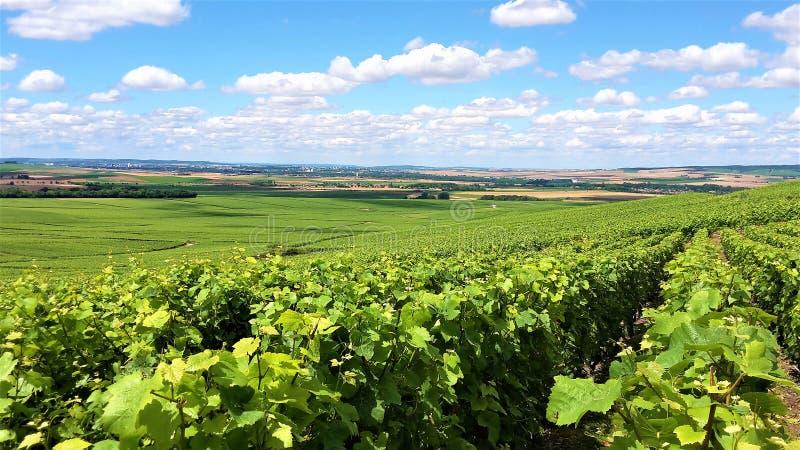 Vinhedos do verão do verde de Champagne fotografia de stock