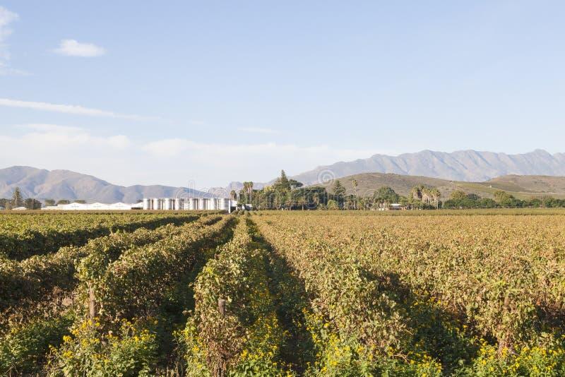 Vinhedos e tanques de fermentação em Van Loveren Winery, Robertson Wine Valley, cabo ocidental Winelands, África do Sul com o pro imagens de stock