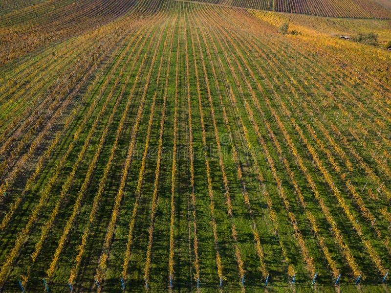 Vinhedos em Checo Moravia, opinião aérea do zangão fotografia de stock royalty free