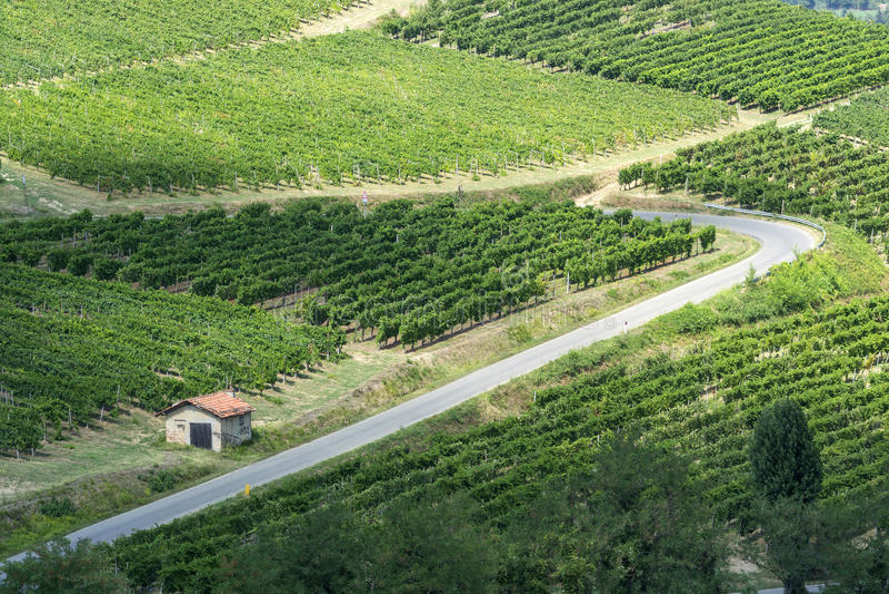 Vinhedos em Oltrepo Pavese (Itália) fotos de stock royalty free
