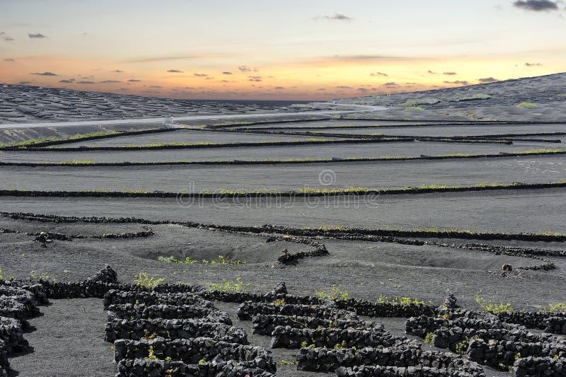 Download Vinhedos No Vale No Por Do Sol, Ilha De Geria Do La De Lanzarote, Canário Imagem de Stock - Imagem de foliage, geologia: 29840311
