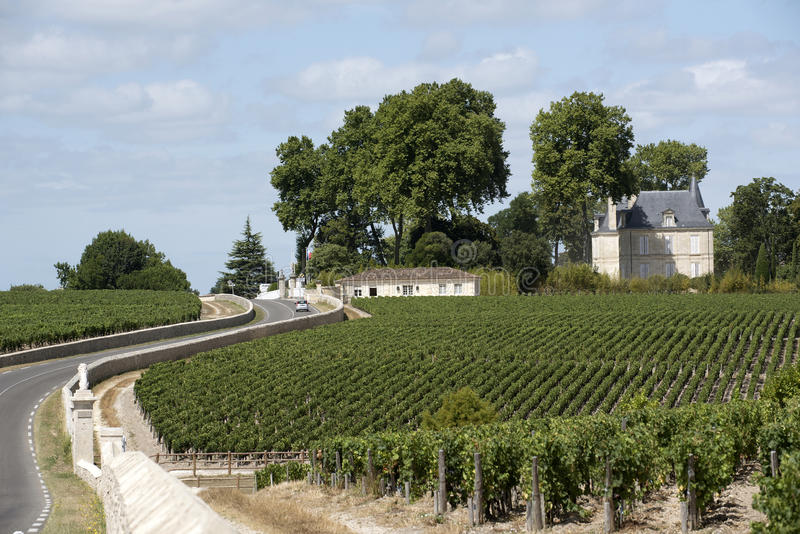 Vinhedos na região de Pauillac de França imagens de stock royalty free