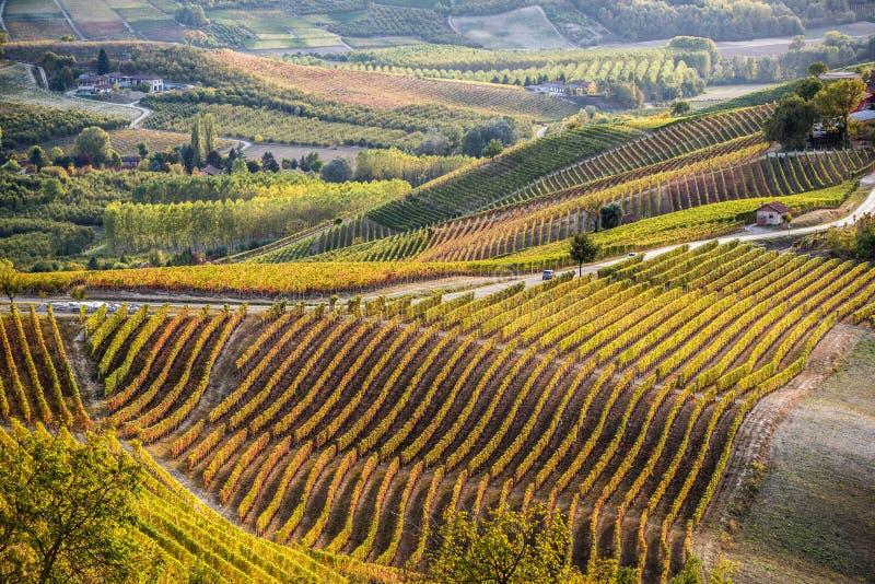Vinhedos na região do langhe de Italia do norte no outono com completamente fotografia de stock