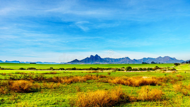 Vinhedos na região do vinho de Stellenbosch imagens de stock royalty free