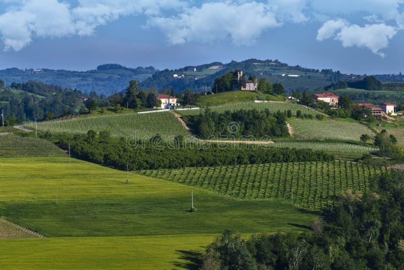 Vinhedos no montanhês de Pianezzo situado na municipalidade de Dogliani Piedmont Itália imagens de stock royalty free