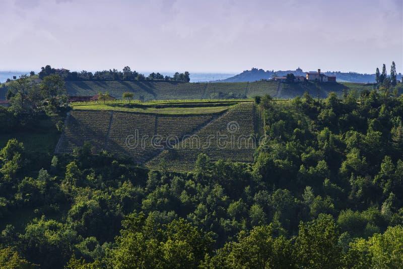 Vinhedos no montanhês de Pianezzo situado na municipalidade de Dogliani Piedmont Itália imagens de stock