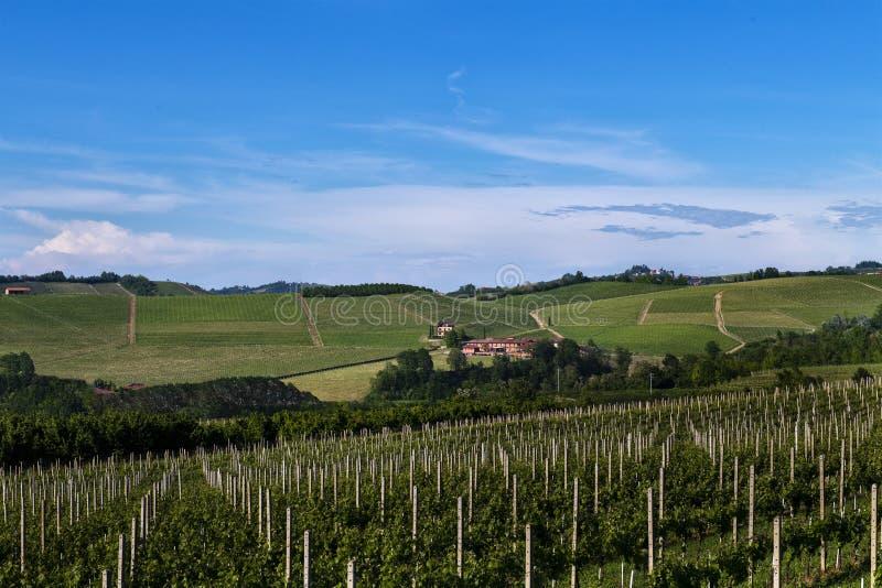 Vinhedos nos montes bonitos na área de Roero de Piedmont Itália imagem de stock royalty free