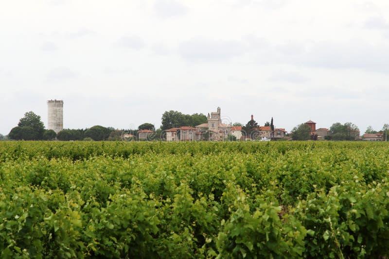 Vinhedos perto da aldeola francesa de Montcalm, Vauvert fotografia de stock