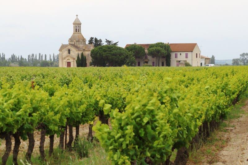 Vinhedos perto de Montcalm, Vauvert, França imagens de stock royalty free