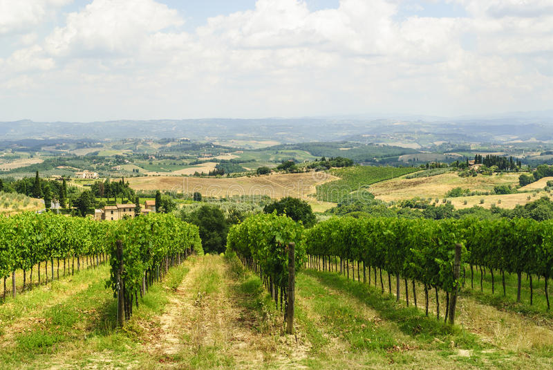 Vinhedos perto de San Gimignano (Siena, Toscânia) fotos de stock