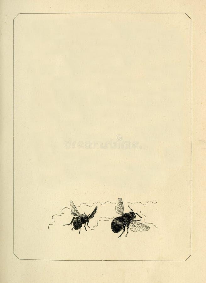 Vinheta suja envelhecida velha da página da folha do papel do livro, espaço isolado da cópia do fundo do quadro ilustração do vetor