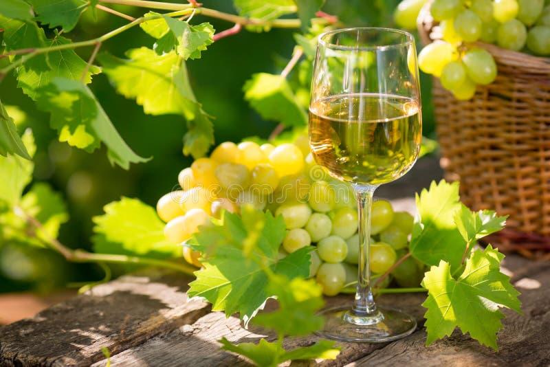 Vinho branco no vidro imagens de stock royalty free