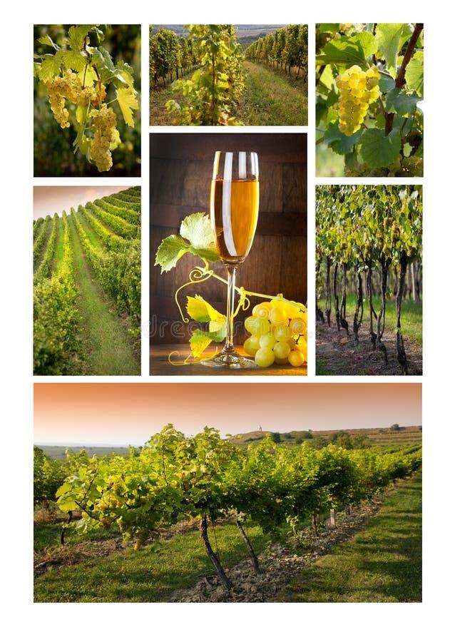 Vinho do mosaico foto de stock royalty free