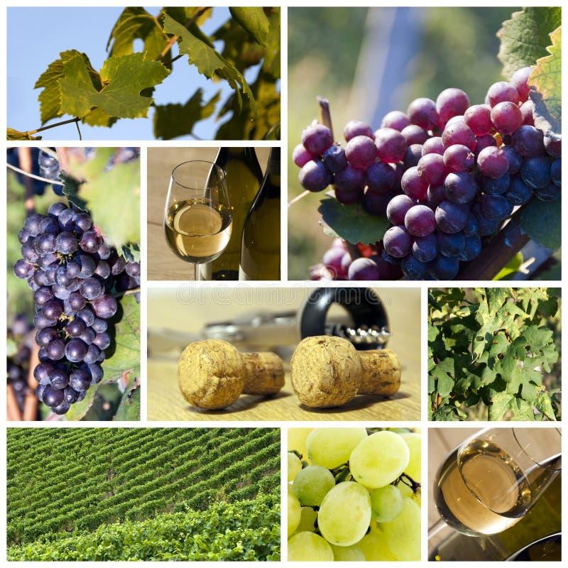 Vinho e colagem do vinhedo fotografia de stock royalty free