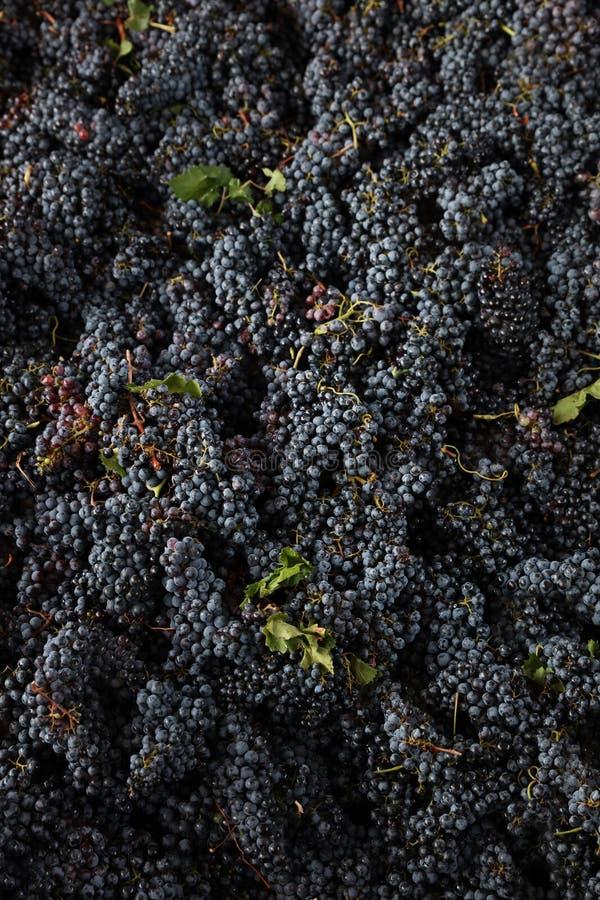 Vinho italiano dos campos das uvas fotografia de stock