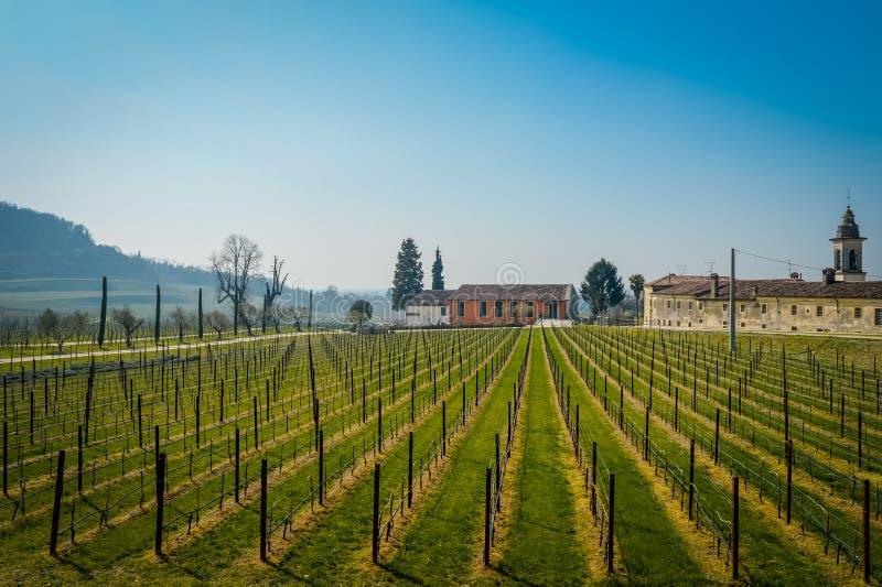 Vinho italiano dos campos do vinhedo fotos de stock royalty free