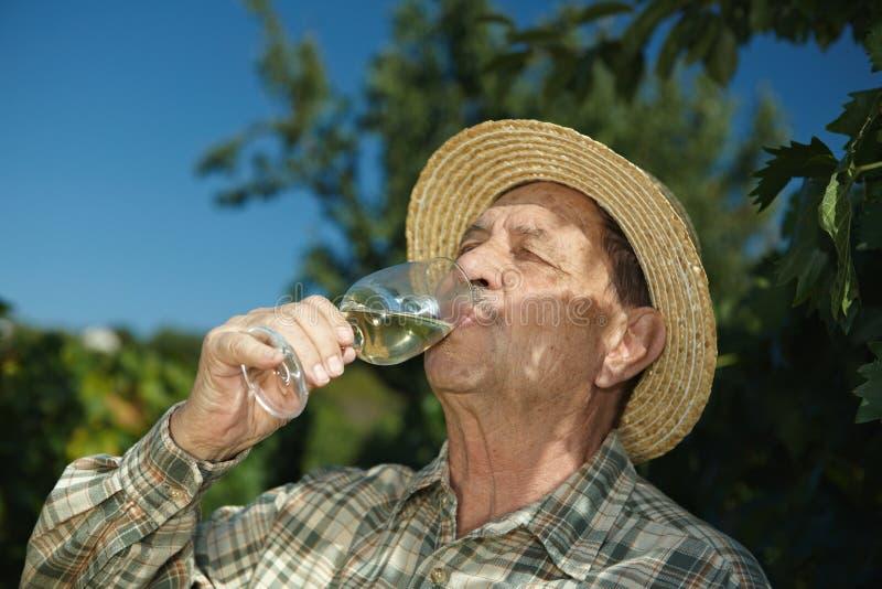 Vinho sênior do teste do winemaker fotos de stock royalty free